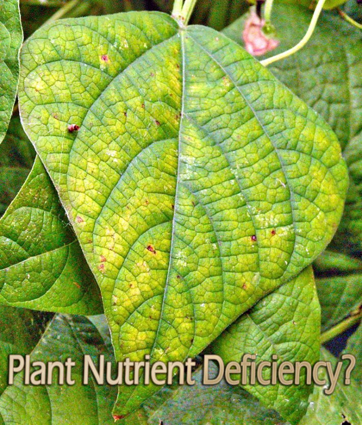 How to Identify and Fix Plant Nutrient Deficiency?