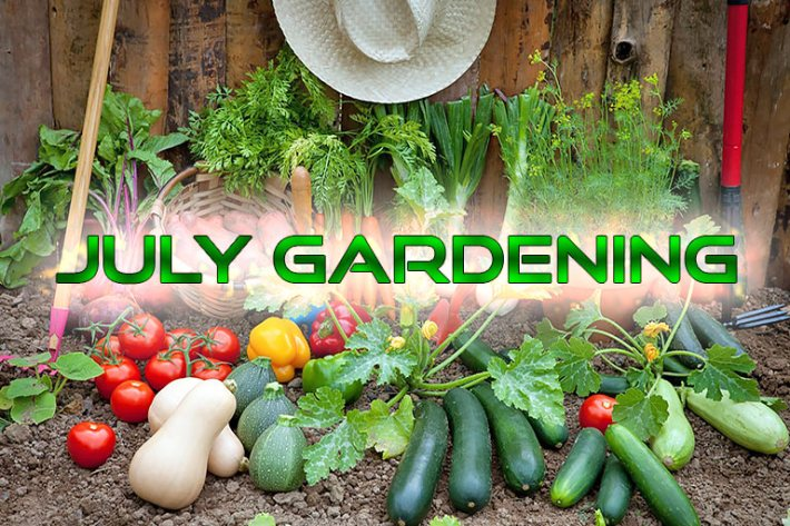 Summer Garden: What to Plant in Your Region in July
