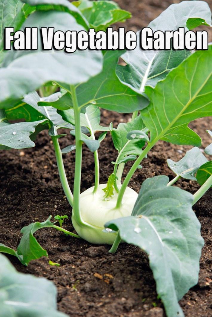 Quiet corner fall vegetable garden 15 best vegetables to for Garden vegetables to grow