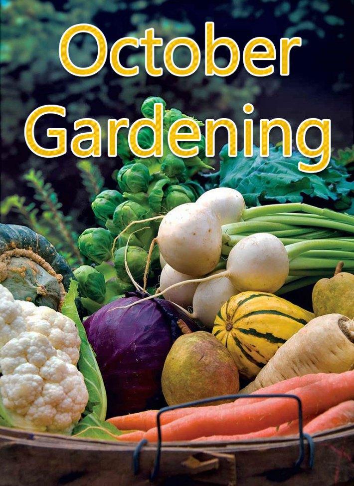 October Gardening: October Garden Tasks in Your Region