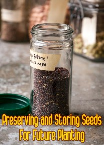 Preserving and Storing Seeds For Future Planting