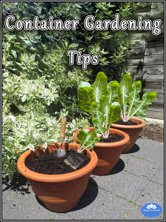 Top 5 Useful Container Gardening Tips