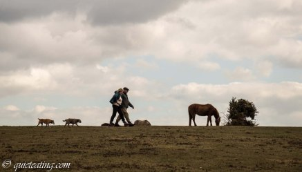 Walking the dogs among the horses.