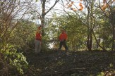 Removing Honeysuckle from Forest Park 02