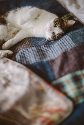 Rufus the cat keeps cosy in a quilt