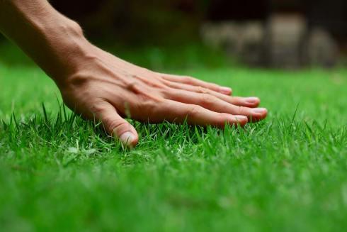 lawn care- healthy lawn - quinju.com