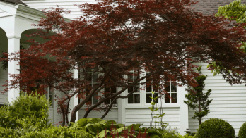 Reducing Air Conditioning Costs - Plant shade trees and shrubs - quinju.com