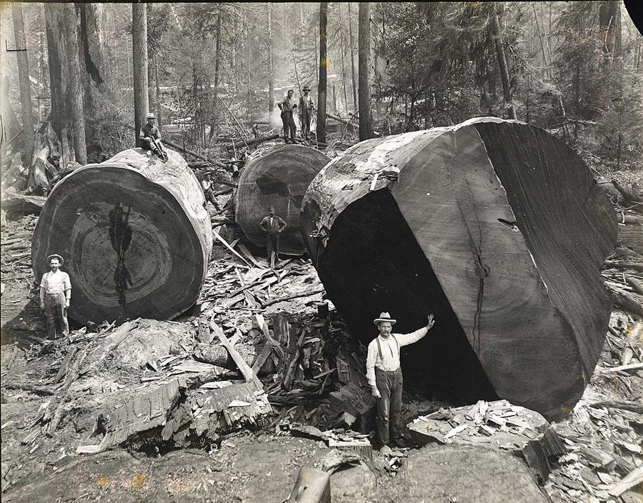grade, dimension, quality of lumber quinju.com
