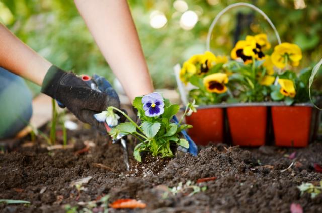 5-easy-summer-home-weekend-diy-fixes-plant-annuals-quinju.com