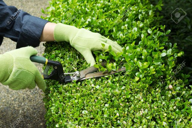5-easy-summer-weekend-home-diy-fixes-triming-hedges-quinju.com