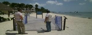 Hotel Secrets Aura no cuenta con autorización federal para manejo de tortugas marinas