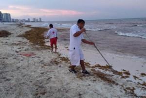 Retiran 363 kg de desechos en playas: #Delphinus