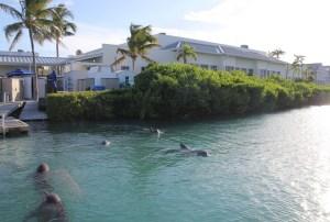 @dolphindiscESP adquiere Dolphin Connectión en Florida