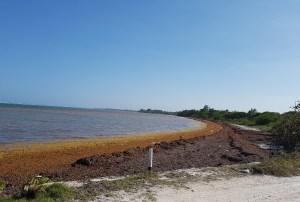 Marina en 15 días mostrará avance en relación al combate a Sargazo en Quintana Roo