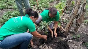 Por un Quintana Roo verde ayudaría a disminuir calentamiento global