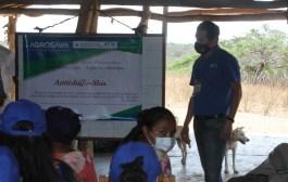 Con el apoyo de AGROSAVIA, los Wayuu comienza a proyectar arreglos silvopastoriles para disminuir las afectaciones por el pastoreo extensivo