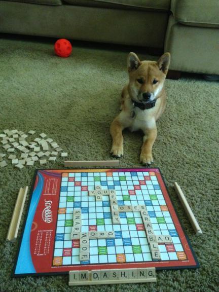 Scrabble Dog