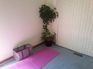 indoor schefflera tree