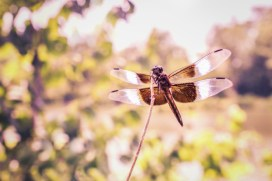 bug bites or shingles