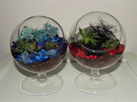 fire and ice terrarium