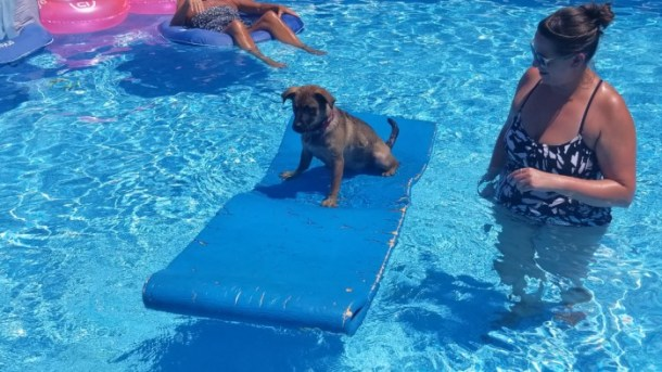 puppy on a raft in the pool