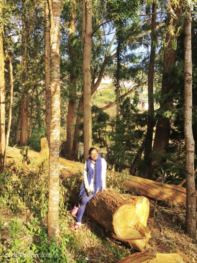 Kodaikanal is a famous hill station in Southern India. Here is a list of experiences you can have in the forests of Kodaikanal beyond the touristy hotspots.