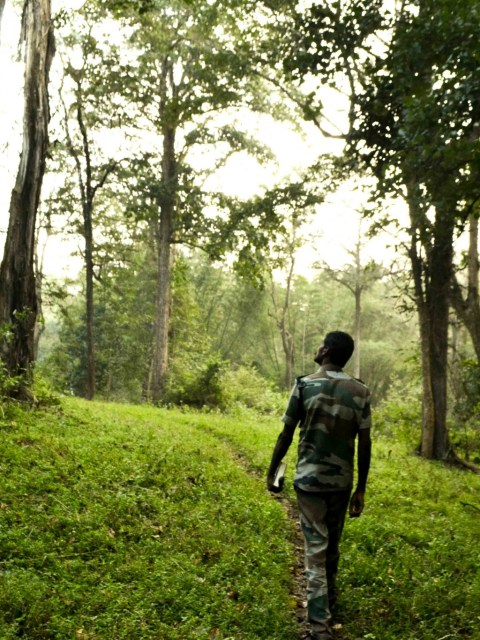 Parambikulam forest reserve Kerala
