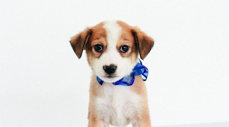 Campaña Adopción