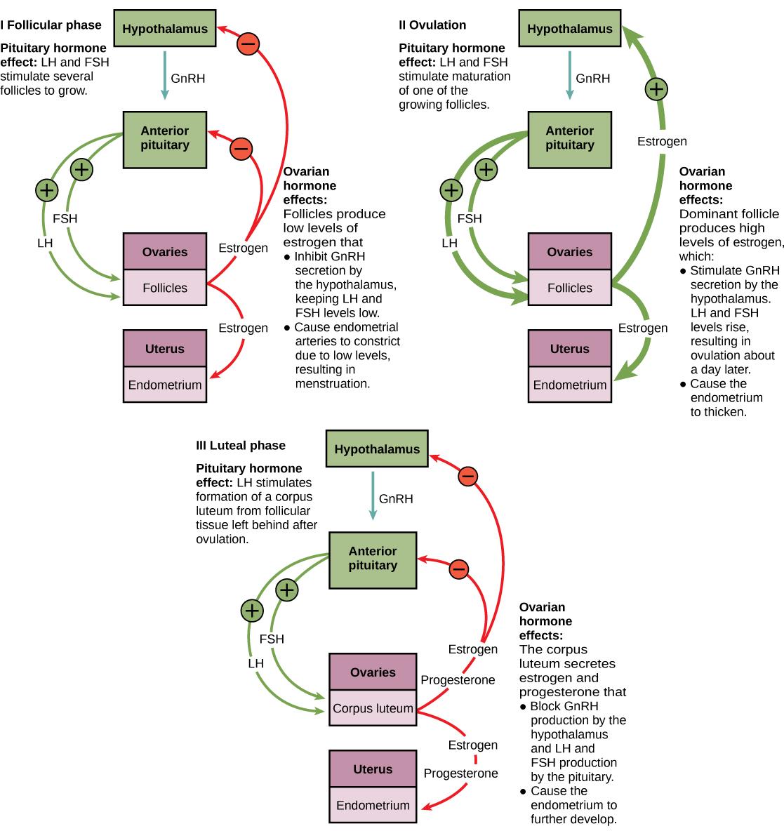 Flow Ch Rt Menstru L Cycle Study Methodology Schem Tic Flowch Rt