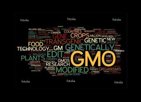 alimentos-transgenicos-mexico