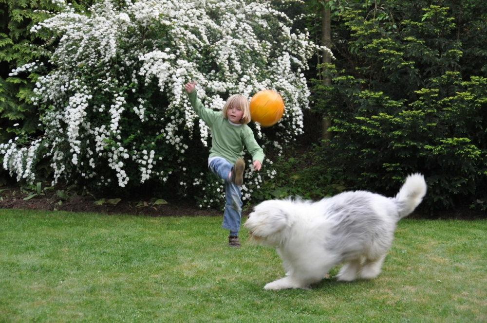 niño y perro scaled