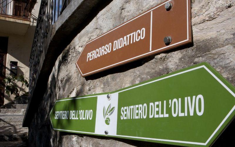 sentiero-olivo1
