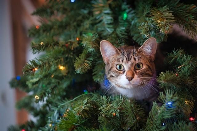 cat stuck on tree