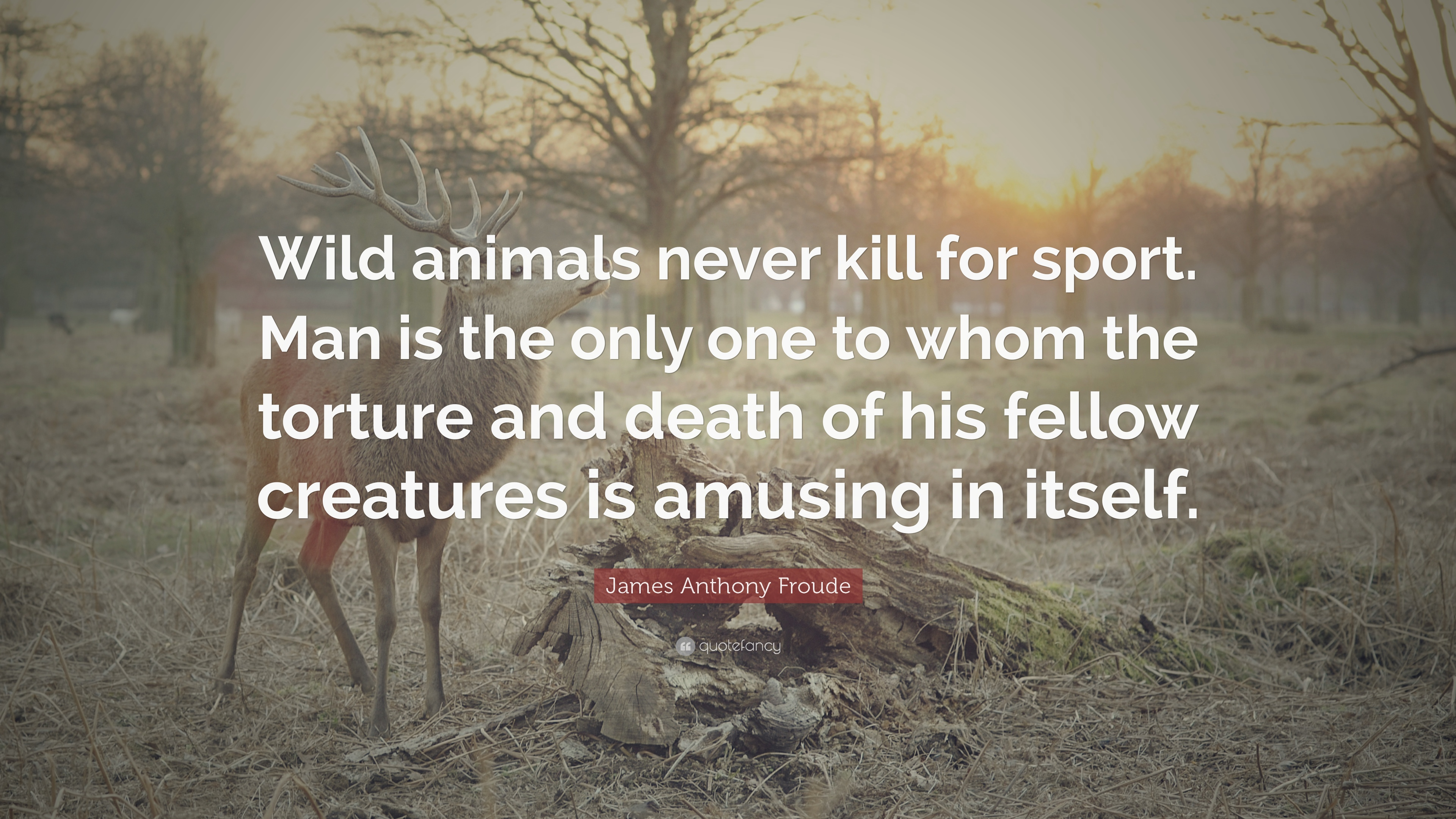 Quotes About Man Killing Animals 20 Quotes