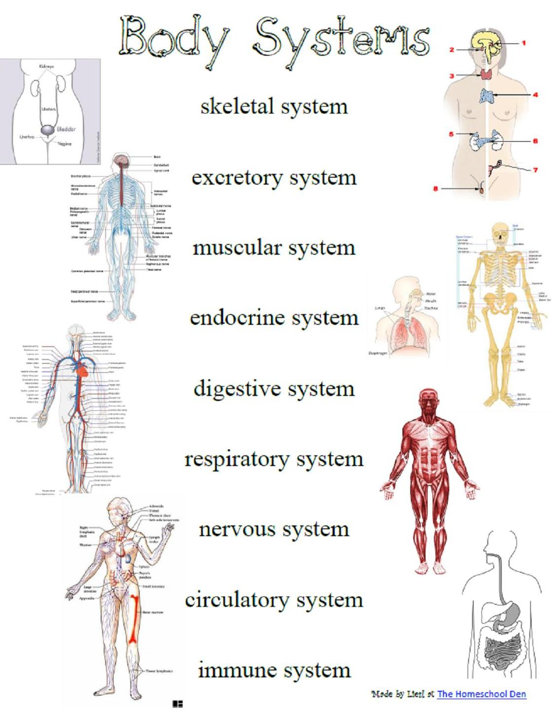 Quotes About Body Systems 56 Quotes