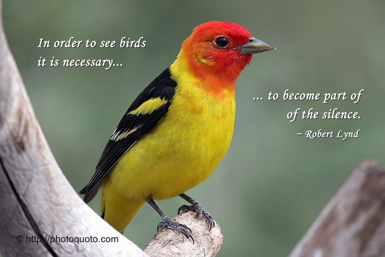 Quotes About Birds 670 Quotes