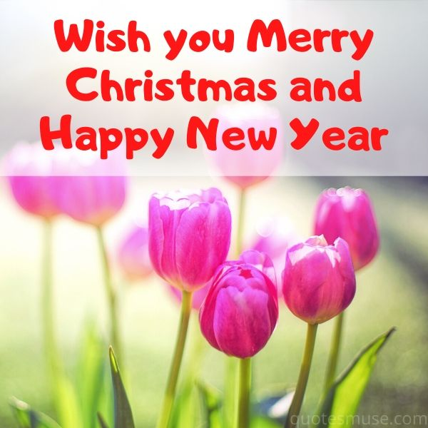70 Wish You Merry Christmas and Happy New Year