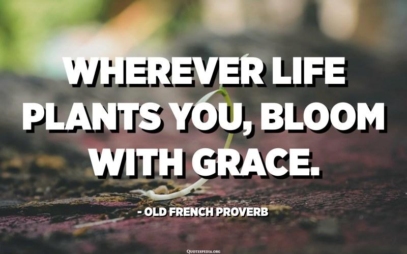 Allà on la vida et planta, floreix de gràcia. - Proverbi francès antic