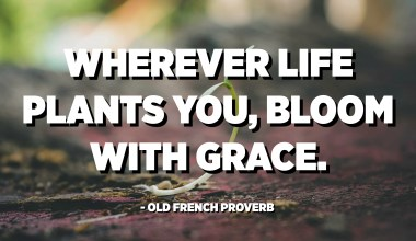 Wherever life plants you, bloom with grace. - Old French Proverb