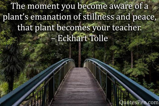 moment-emanation-Good Morning Nature Sayings