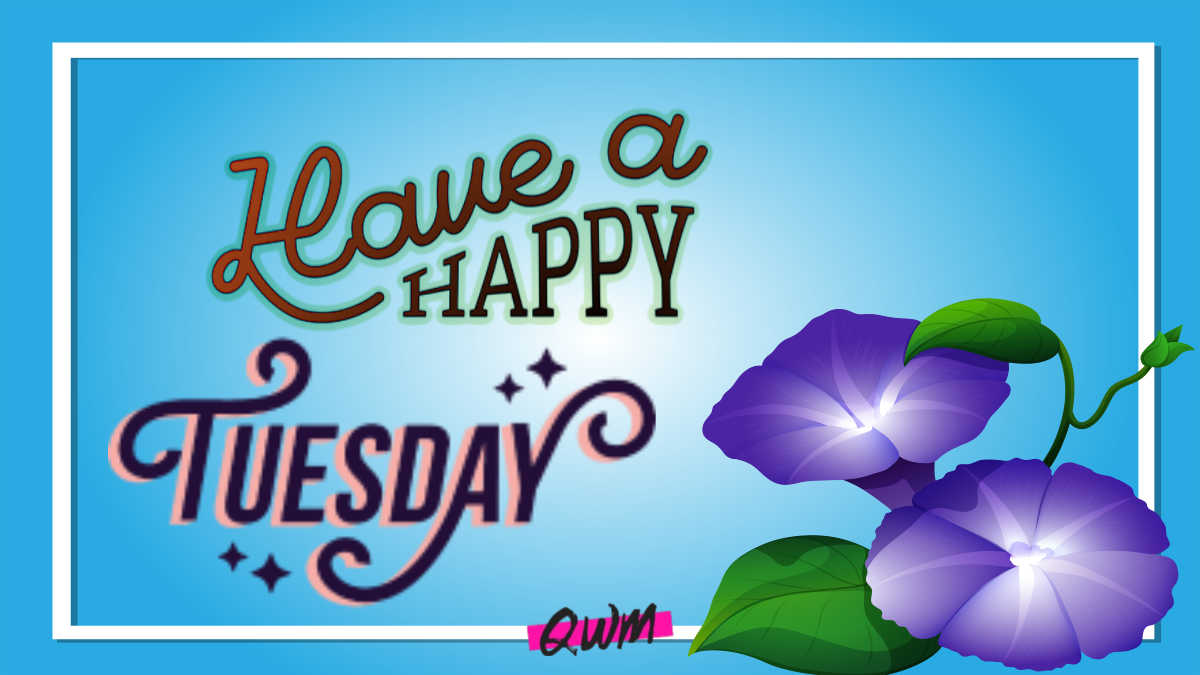 Happy Tuesday Quotes   Good Morning Tuesday Wishes, Messages