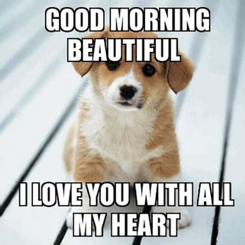 Funny Good Morning Memes | Have a Good Day Memes For Him/Her