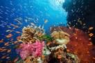 La-Gran-Barrera-de-Coral-PEz