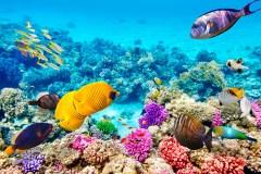-australia-la-gran-barrera-de-coral-2
