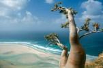 Socotra-Island-in-Yemen-10-1