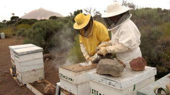 apicultura tenerife