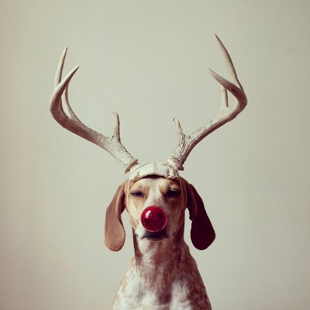 Maddie : Ma chienne, ma muse