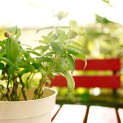 赤いイスと観葉植物