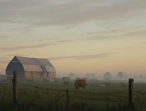 Norfolk Barn Farm
