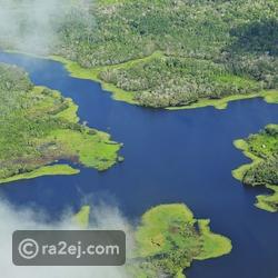 الغابات المطيرة - جنوب أفريقيا